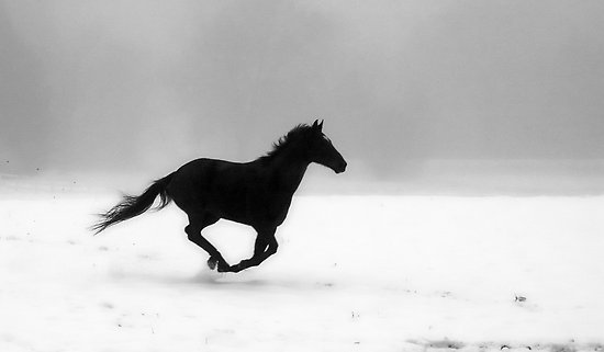 images of horses in black and white - photo #15